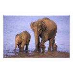 India, Nagarhole National Park. Asian elephant Photo Art