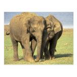 India, Nagarhole National Park. Asian elephant Postcard