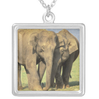 India, Nagarhole National Park. Asian elephant Silver Plated Necklace