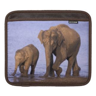 India, Nagarhole National Park. Asian elephant Sleeve For iPads