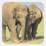 India, Nagarhole National Park. Asian elephant Square Stickers