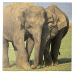India, Nagarhole National Park. Asian elephant Tile