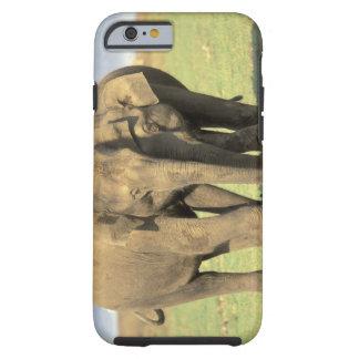 India, Nagarhole National Park. Asian elephant Tough iPhone 6 Case