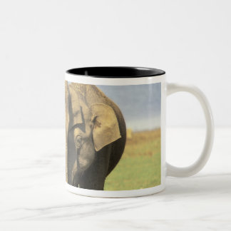 India, Nagarhole National Park. Asian elephant Two-Tone Coffee Mug