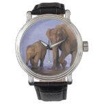 India, Nagarhole National Park. Asian elephant Watches