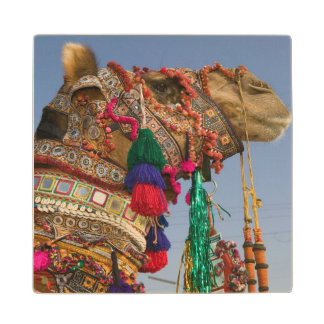 INDIA, Rajasthan, Pushkar: PUSHKAR CAMEL FAIR, Wood Coaster