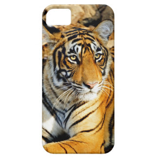 India, Sawai Madhopur, Ranthambore National Barely There iPhone 5 Case