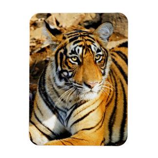India, Sawai Madhopur, Ranthambore National Rectangular Photo Magnet