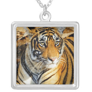 India, Sawai Madhopur, Ranthambore National Silver Plated Necklace