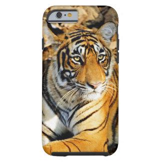 India, Sawai Madhopur, Ranthambore National Tough iPhone 6 Case