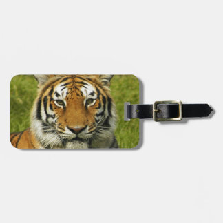 India tiger Peace and calm Luggage Tag