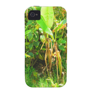 India Travels Infant Banana trees saplings Green iPhone 4/4S Cover