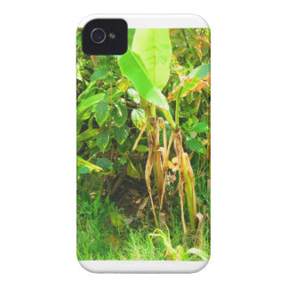 India Travels Infant Banana trees saplings Green iPhone 4 Case-Mate Cases