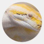 Indian Albino Python Ho Chi Minh City Zoo, Vietnam Round Sticker
