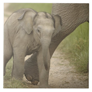 Indian / Asian Elephant and young one,Corbett 2 Large Square Tile