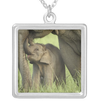 Indian / Asian Elephant and young one,Corbett 2 Square Pendant Necklace