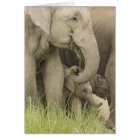 Indian / Asian Elephant and young one,Corbett 3 Card