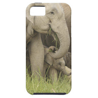 Indian / Asian Elephant and young one,Corbett 3 iPhone 5 Cases