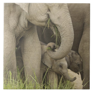 Indian / Asian Elephant and young one,Corbett 3 Large Square Tile