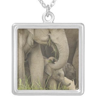 Indian / Asian Elephant and young one,Corbett 3 Square Pendant Necklace