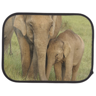 Indian / Asian Elephant and young one,Corbett Car Mat