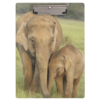 Indian / Asian Elephant and young one,Corbett Clipboard