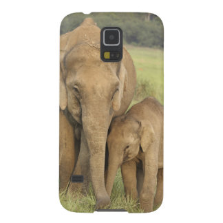 Indian / Asian Elephant and young one,Corbett Galaxy S5 Cover