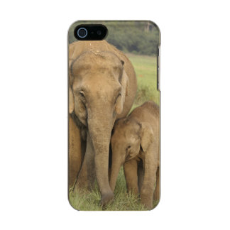 Indian / Asian Elephant and young one,Corbett Incipio Feather® Shine iPhone 5 Case