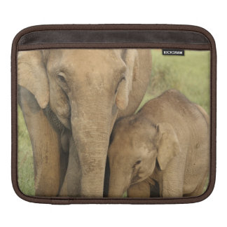 Indian / Asian Elephant and young one,Corbett iPad Sleeve
