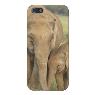 Indian / Asian Elephant and young one,Corbett iPhone 5 Case