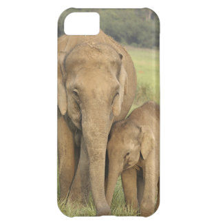 Indian / Asian Elephant and young one,Corbett iPhone 5C Case
