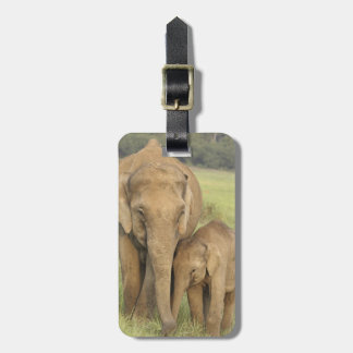 Indian / Asian Elephant and young one,Corbett Luggage Tag