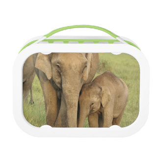 Indian / Asian Elephant and young one,Corbett Lunch Box