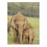 Indian / Asian Elephant and young one,Corbett Postcards
