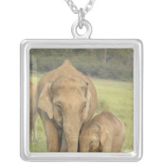 Indian / Asian Elephant and young one,Corbett Square Pendant Necklace
