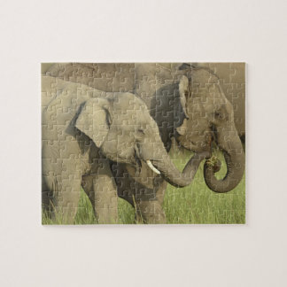 Indian / Asian Elephant asking for food;Corbett Jigsaw Puzzle