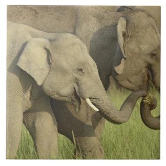 Indian / Asian Elephant asking for food;Corbett Tile