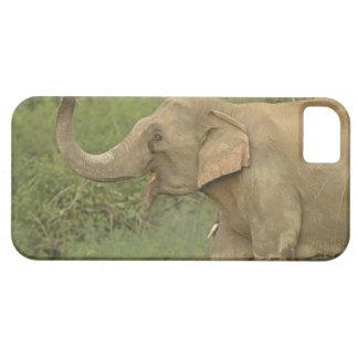 Indian / Asian Elephant communicating,Corbett 2 iPhone 5 Case