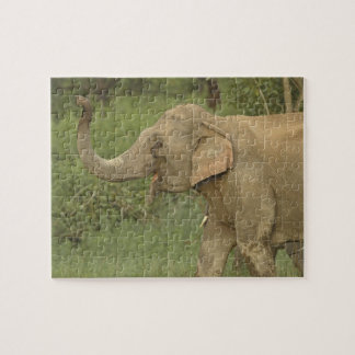 Indian / Asian Elephant communicating,Corbett 2 Jigsaw Puzzle