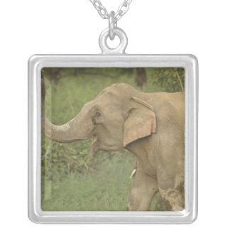 Indian / Asian Elephant communicating,Corbett 2 Silver Plated Necklace