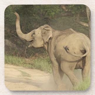 Indian / Asian Elephant communicating,Corbett Coaster