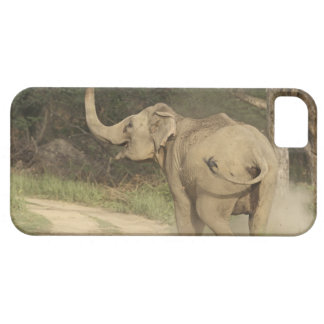 Indian / Asian Elephant communicating,Corbett iPhone 5 Cover