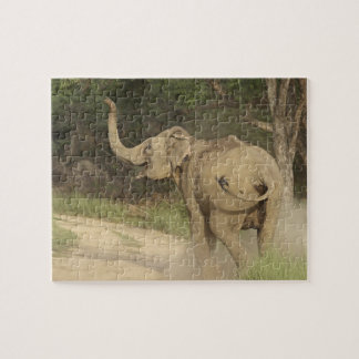 Indian / Asian Elephant communicating,Corbett Jigsaw Puzzle