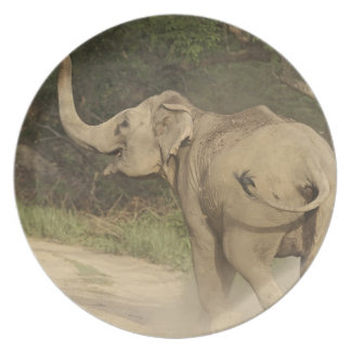 Indian / Asian Elephant communicating,Corbett Party Plates