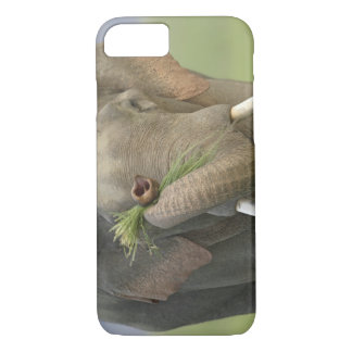 Indian / Asian Elephant displaying food,Corbett 2 iPhone 8/7 Case