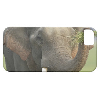 Indian / Asian Elephant displaying food,Corbett iPhone 5 Cases