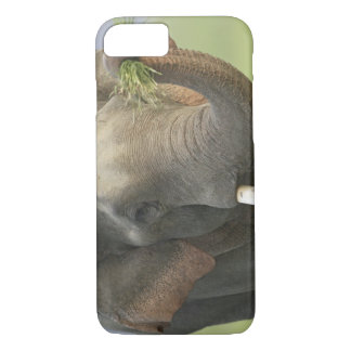 Indian / Asian Elephant displaying food,Corbett iPhone 8/7 Case