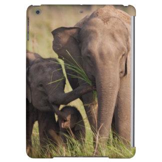 Indian Asian Elephant family in the savannah