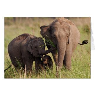 Indian Asian Elephant family in the savannah Card