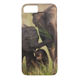 Indian Asian Elephant family in the savannah iPhone 8/7 Case